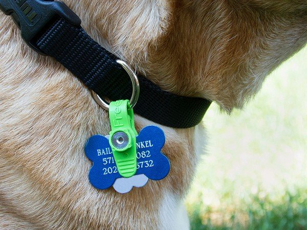 Freezetag Pet Tag Silencer The Grommet