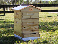 Honey Bee City: Cottage Urban Beehive