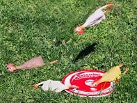 Flickin' Chicken: Rubber Chicken Target Game