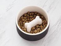 Magisso Happy Pet Project: Slow Feed Dog Bowl