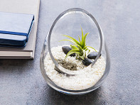 Luludi Living Art: Cut Glass Gem Terrarium