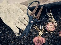 Barebones Living: Garden Scissors