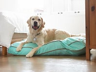 Molly Mutt: Nightswimming Dog Bed Duvet