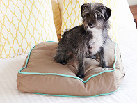 Molly Mutt: Wild Horses Dog Bed Duvet