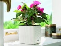 LECHUZA: Cube Self-Watering Planter
