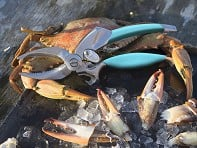 Toadfish Outfitters: Crab Claw Cutter