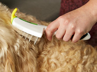 LUMO: Self-Cleaning Pet Grooming Brush