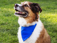 Bandana Bowl?: Bandana Cooling Collar & Dog Bowl
