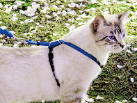 PetSafe?: Come With Me Kitty? Harness & Leash