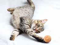 Americat Company: Cardboard Cat Ball Toy - Set of 3