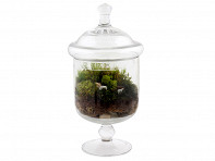 Twig Terrariums: Grazed & Confused