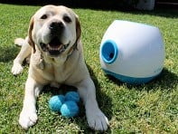 iFetch Too: Automatic Ball Launcher for Large Dogs