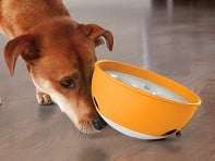 PAW5: Rock 'N Bowl Dog Feeder