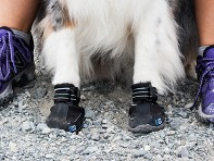 RC Pets: Ultimate Trail Boot