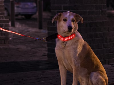 4id: LED Light Up Collar