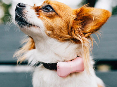 Wondermento: Bow Tie Dog Activity Tracker