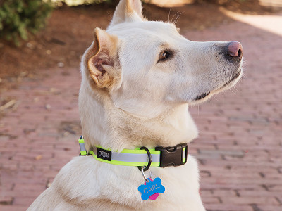Stunt Puppy: Reflective Dog Collar