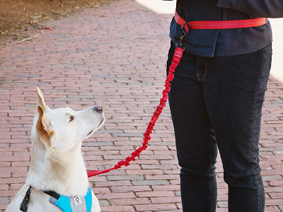 Stunt Puppy: Hands-Free Running Leash