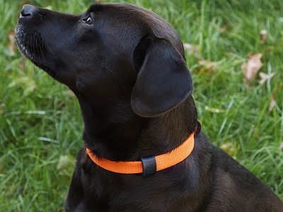 Vuff: Odor-Resistant Ultra Lightweight Adjustable Dog Collar