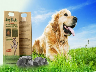 Dog Rocks: Water Purifier