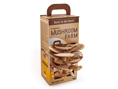 Back to the Roots: Mushroom Kit