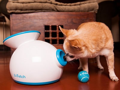 iFetch: Automatic Ball Launcher