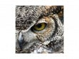 Small Wooden Jigsaw Puzzle - Great Horned Owl