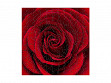 Small Wooden Jigsaw Puzzle - Red Rose