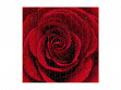 Medium Wooden Jigsaw Puzzle - Red Rose