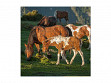 Medium Wooden Jigsaw Puzzle - Foal in a Mt Sunrise