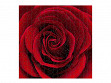 Large Wooden Jigsaw Puzzle - Red Rose