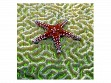 Small Wooden Jigsaw Puzzle - Starfish on Brain Coral