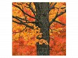 Wooden Jigsaw Puzzle - Medium - New England Maple Tree