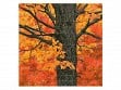 Medium Wooden Jigsaw Puzzle - New England Maple Tree