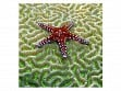Wooden Jigsaw Puzzle - Medium - Starfish on Brain Coral