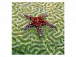 Medium Wooden Jigsaw Puzzle - Starfish on Brain Coral