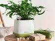 Yula Self-Watering Single Planter