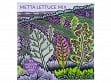 Metta Lettuce Mix Seeds