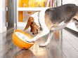 Rock 'N Bowl Dog Feeder