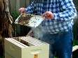 Starter Beekeeping Kit