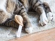 Fortune Cookie Cat Toy Set