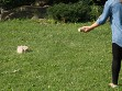 Outdoor Throwing Game