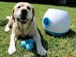 Automatic Dog Ball Launcher - Large